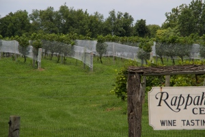 Rappahannock Cellars Winery