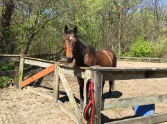 Rock Creek Park Boulder Bridge Hike Stables horse