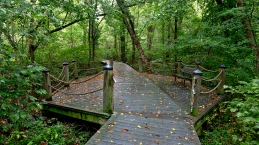 Swamp Trail on Theodore Roosevelt Island